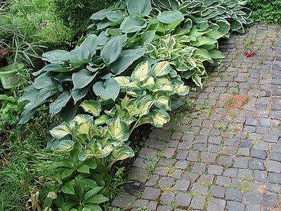 Garten-Neuanlagen: Gartenbau • Gartenplanung • Landschaftsbau